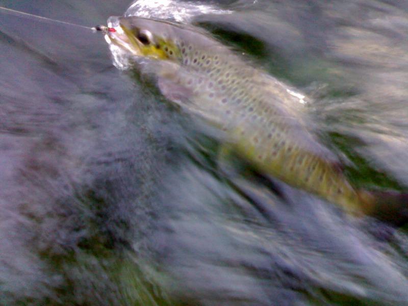 рыболовный форум активатор клева голодная рыба